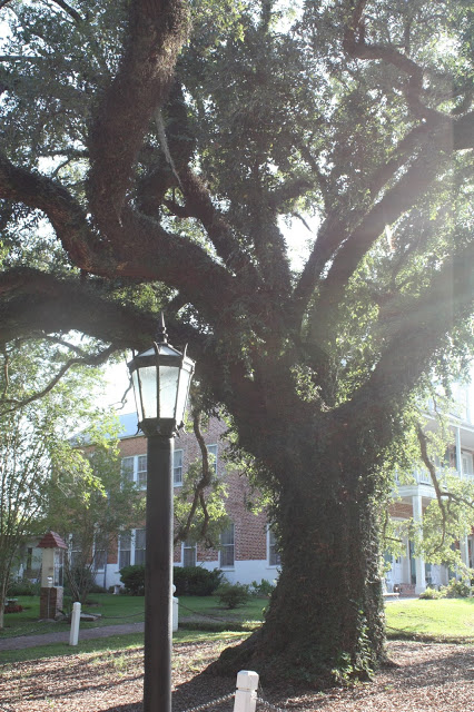 What to see on the drive to New Orleans: Evangeline Oak in St. Martinville