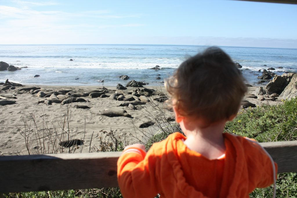 Big Sur drive stops: elephant seals in San Simeon