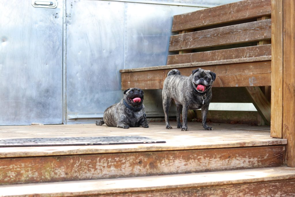 Barking Springs Dog Ranch Austin - dog boarding and dog daycare near the airport