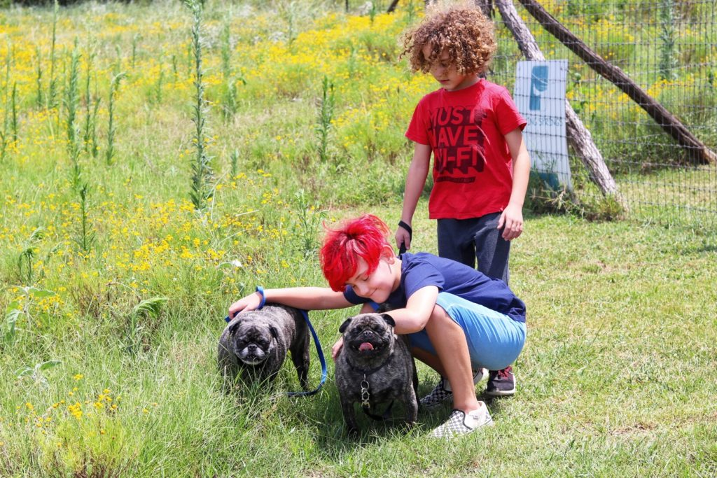 our dogs loved the austin kennel at barking springs dog ranch