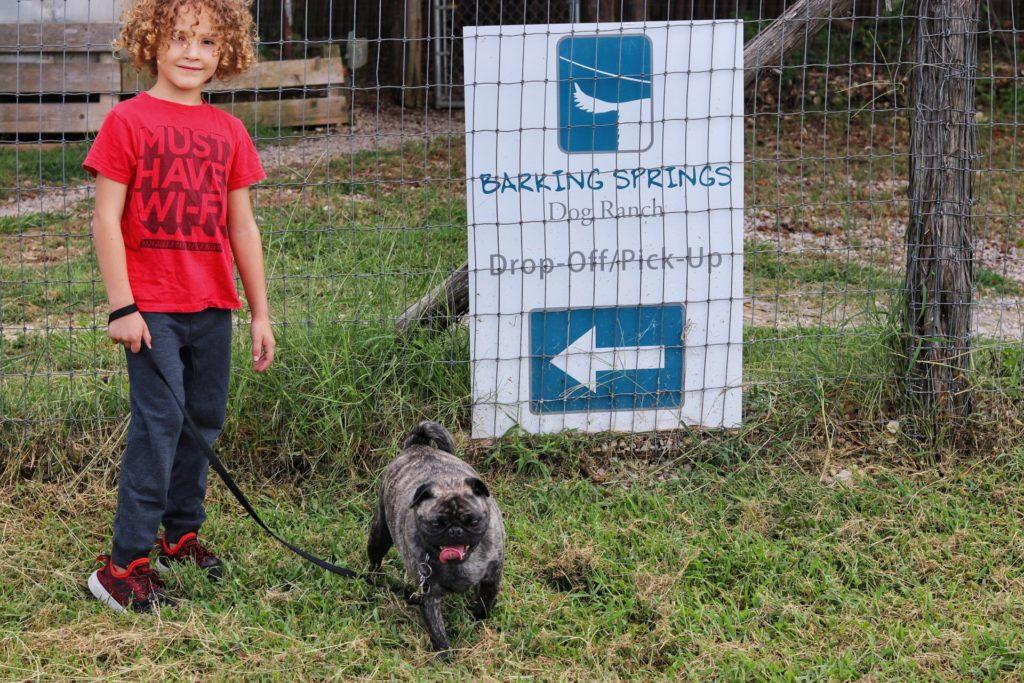 barking springs ranch dog boarding in austin