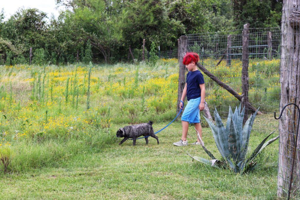 barking spring dog ranch