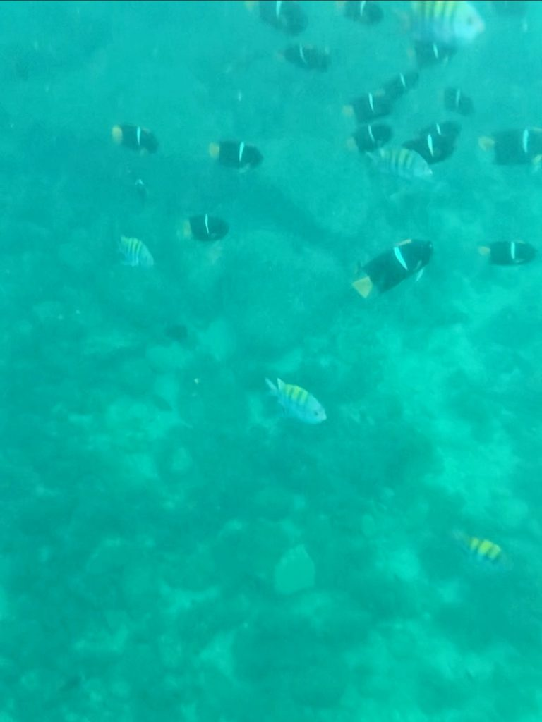 snorkeling in the bay of banderas