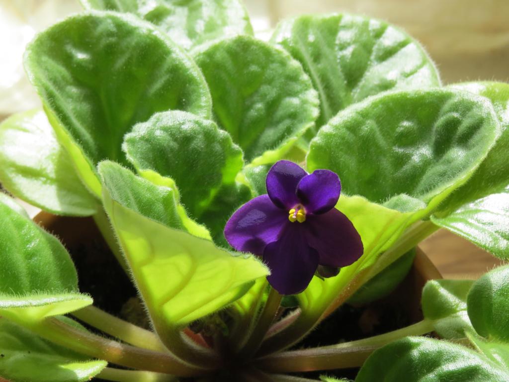 feng shui plants for wealth
