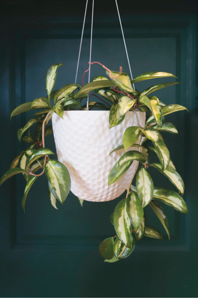 plants for feng shui