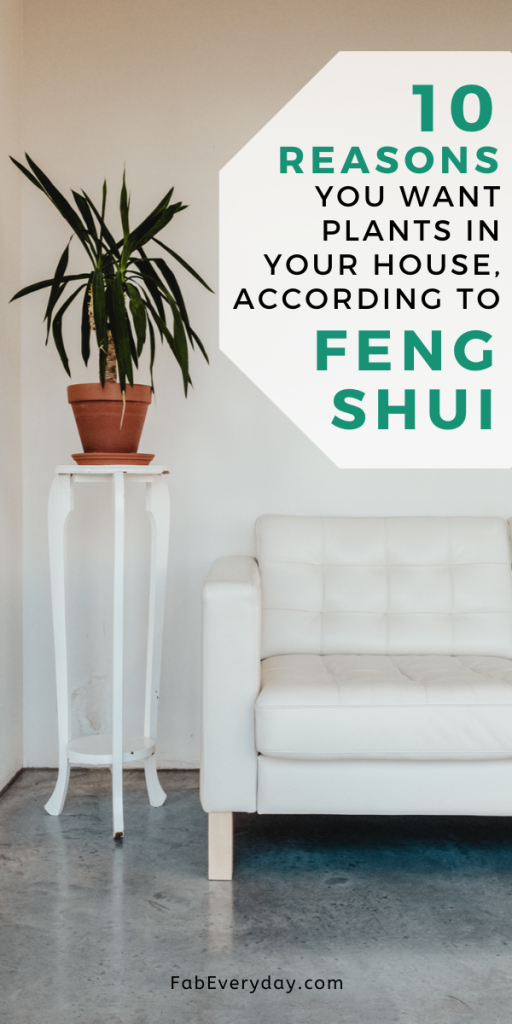 10 Reasons You Want Plants in Your House, According to Feng Shui